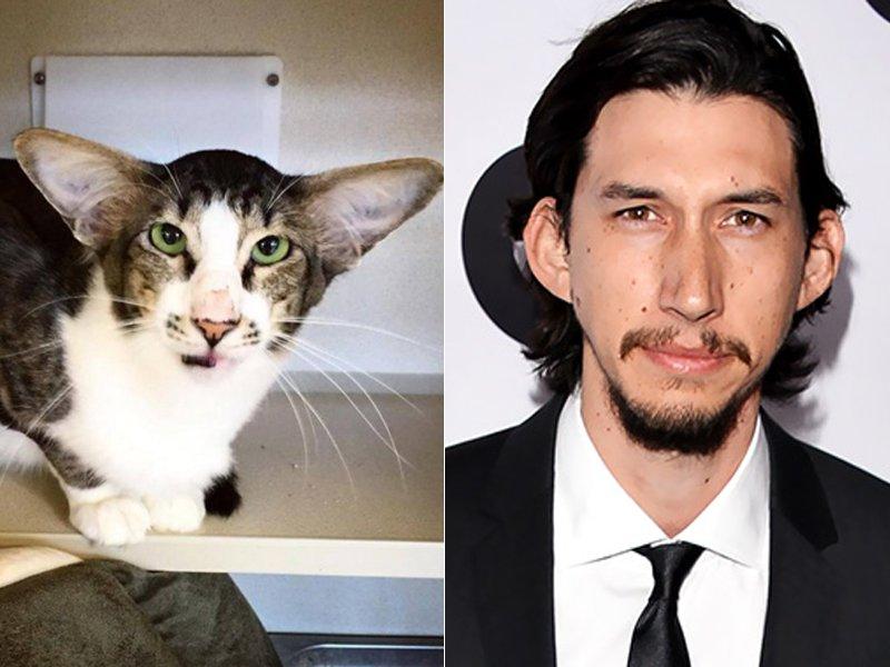 Adam Driver gato